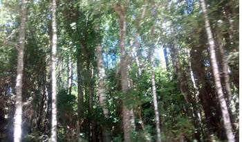 bosques araucania